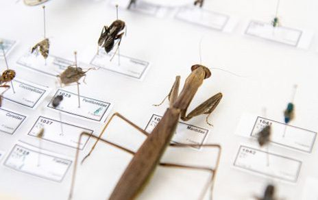 Biology, insects