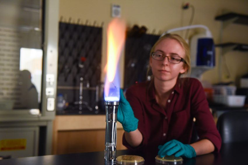 A student completes research during the Summer Scholars.