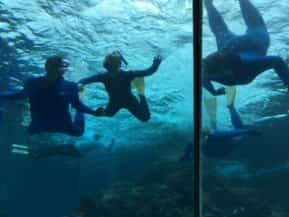 Students scuba diving off the Great Barrier Reef in Australia