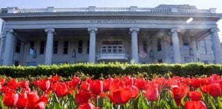 Tulips stand up tall in the sunny afternoon at Belmont University Nashville, Tennessee.