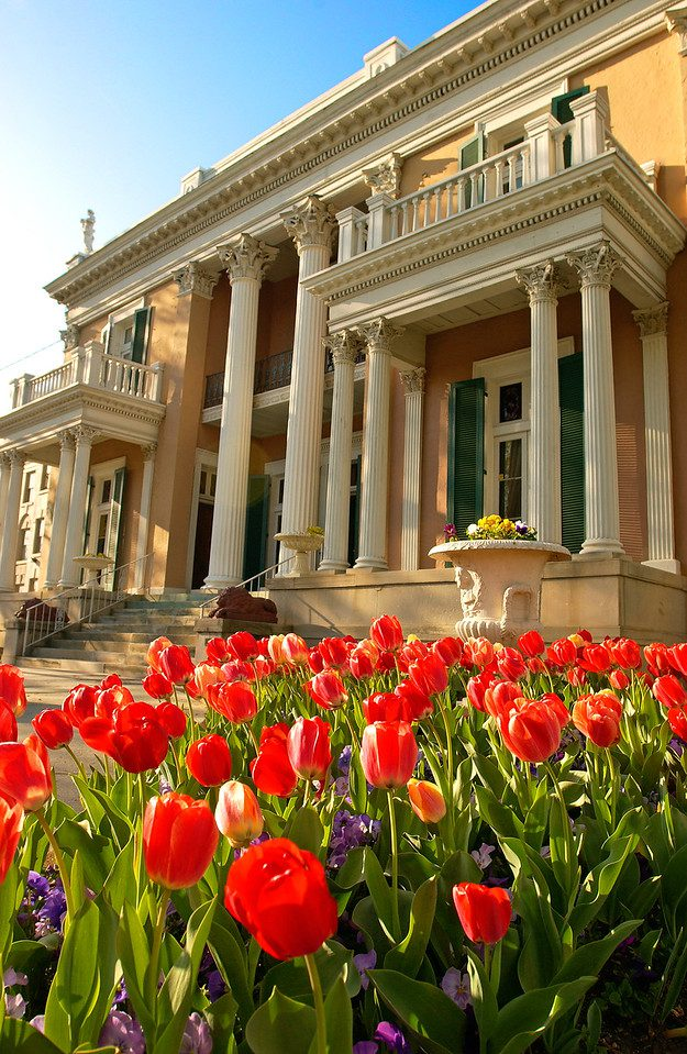 Belmont mansion with tulips in front