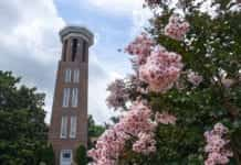 Bell Tower and Flowers