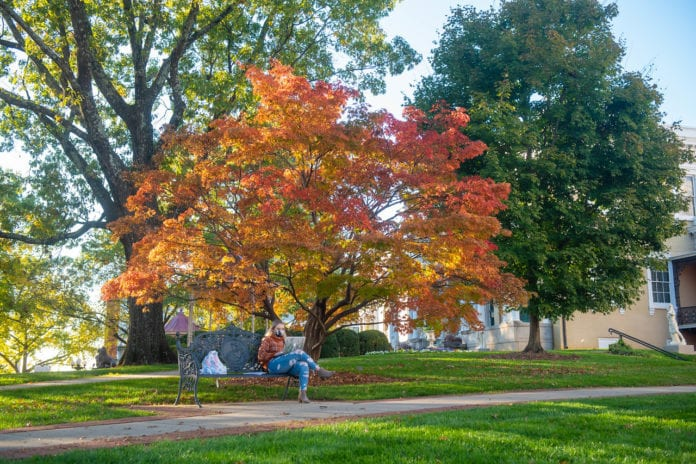 A student does homework on a bench next to a beautiful tree at Belmont
