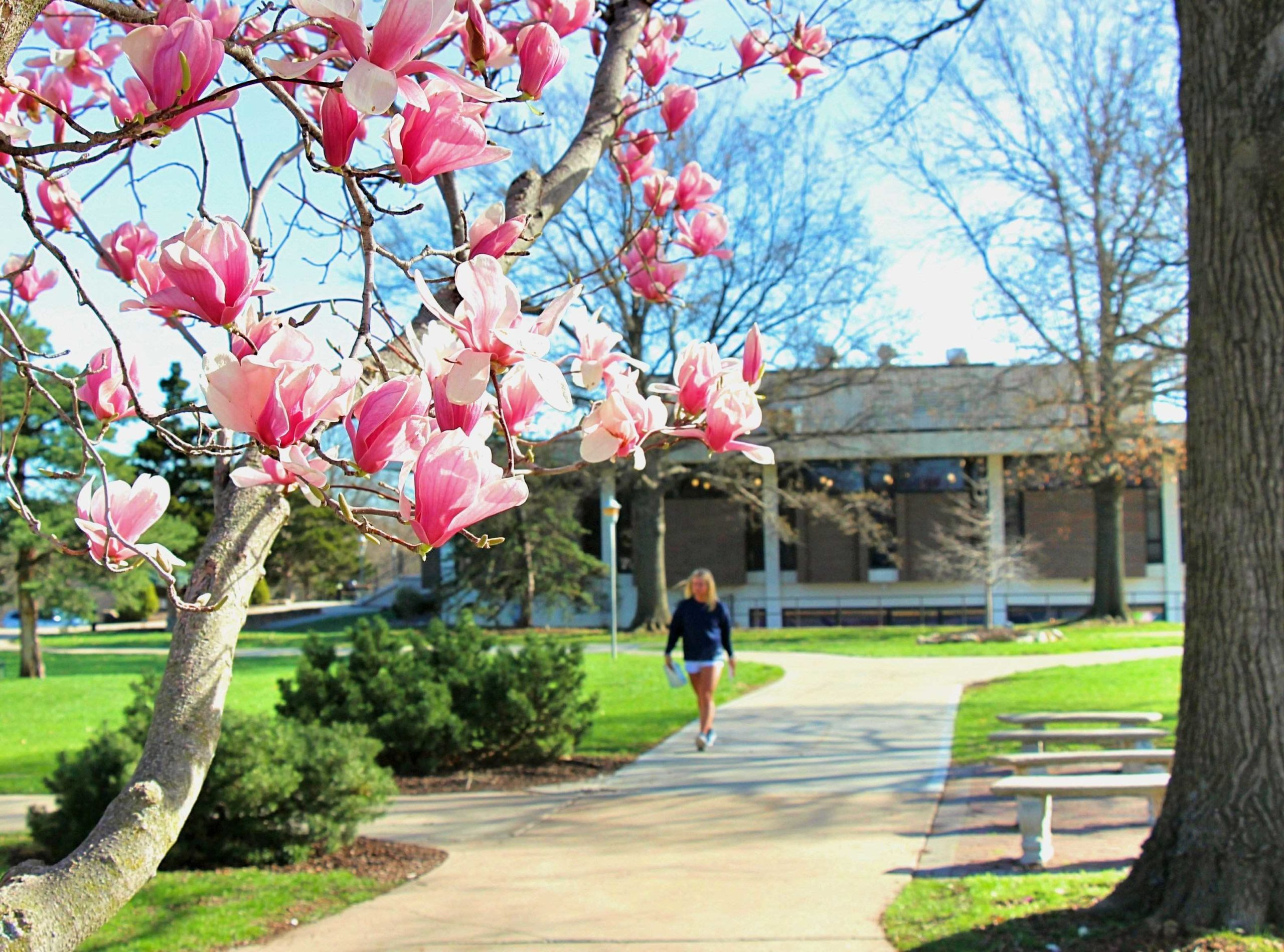 Student walking on campus framed by magnolia blooms