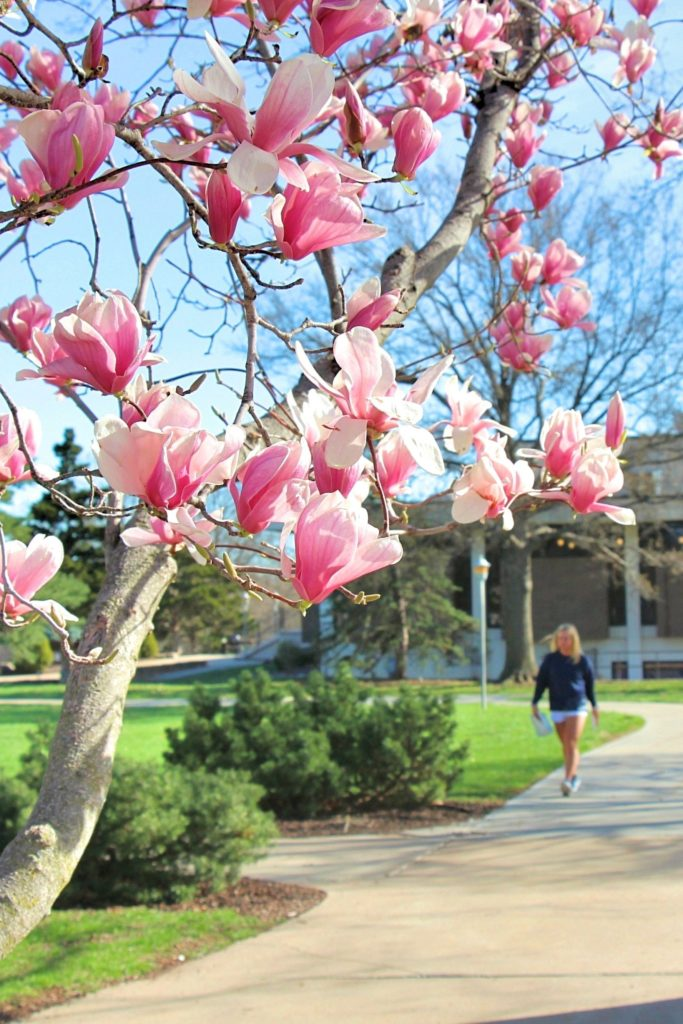 Student walking toward camera framed by magnolia flowers