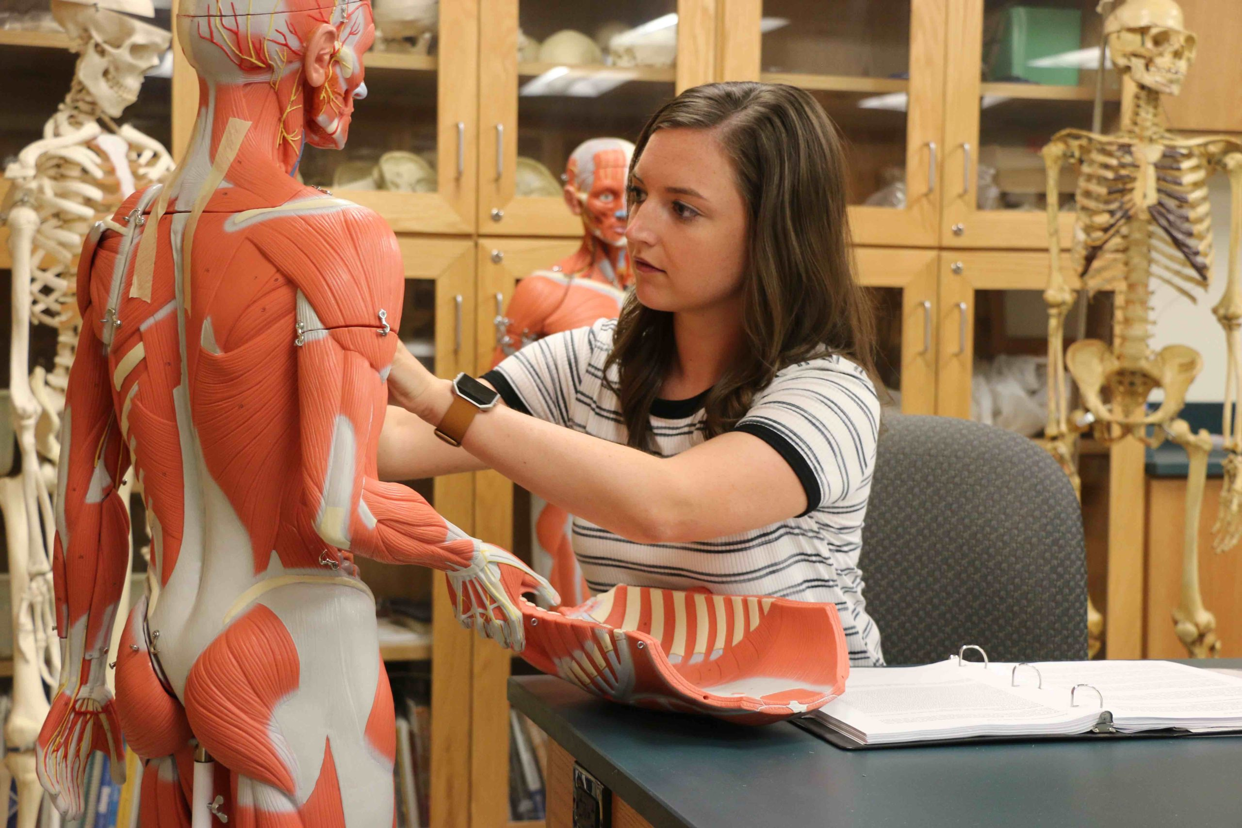Student studying the musculature of an anatomic mannequin in a physiology lab